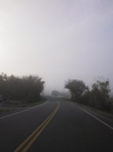 A foggy sunrise along a country road